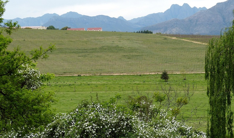 A view on a vineyard