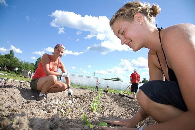 Two women planting something
