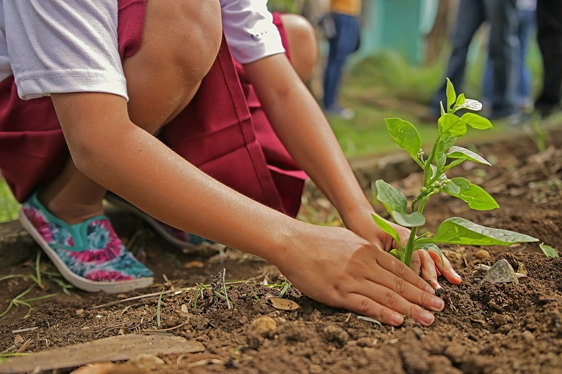 A girl planting a tree